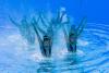 싱크로나이즈드 대회 `물 속에서 열정적인 연기`
