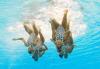 [포토]싱크로나이즈드 대회 `물 속에서 명연기`