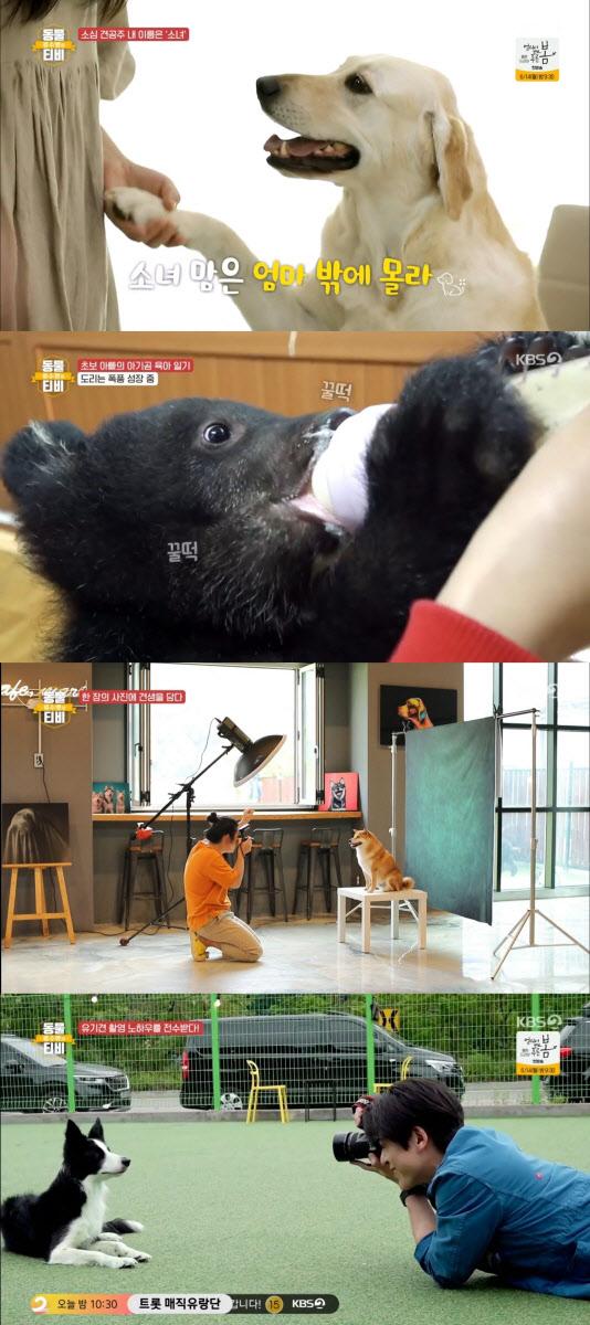 '류수영의 동물티비', 사진 한 장에 담긴 유기견의 눈물겨운 스토리