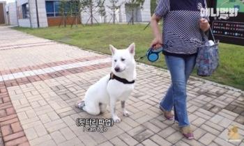 장애견에 '뒷다리 파업' 비하 자막… '동물농장' 유튜브 논란